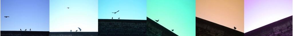 oiseaux-quai-arles-gallery-anne-eliayan