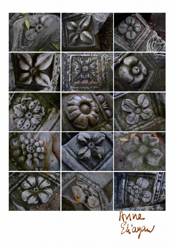 fleurs du jardin de pierre théâtre antique Arles Gallery galerie de photos Anne Eliayan
