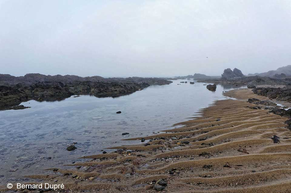 bernard-dupre-photographie-rivages-salin-de-giraud-4