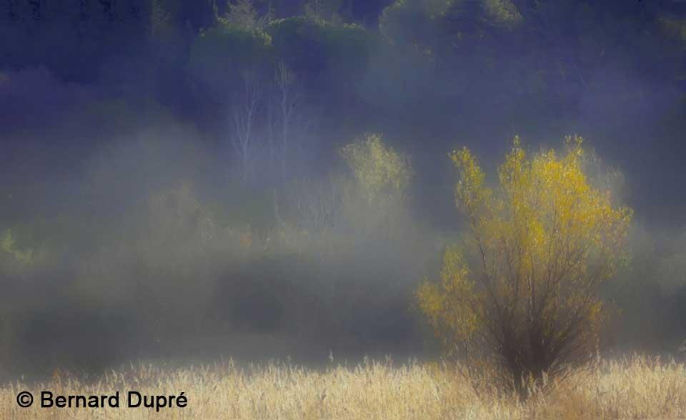 brume-automne-beauchamp-bernard-dupre-photos
