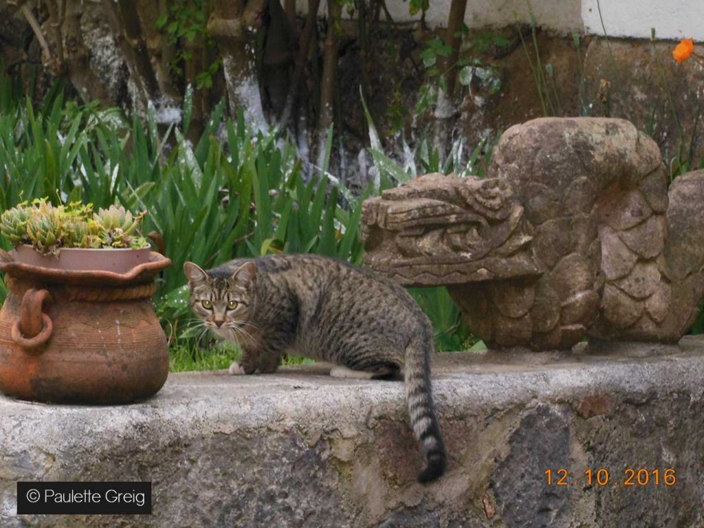 CHAT-MEXICAIN-PAULETTE-GREIG