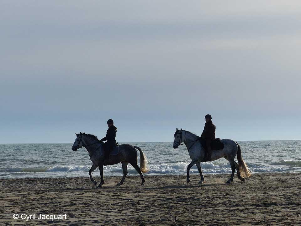 cyril-jacquart-reserve-chevaux