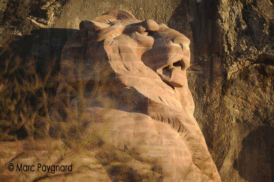 Lion-de-Belfort-Marc-PAYGNARD