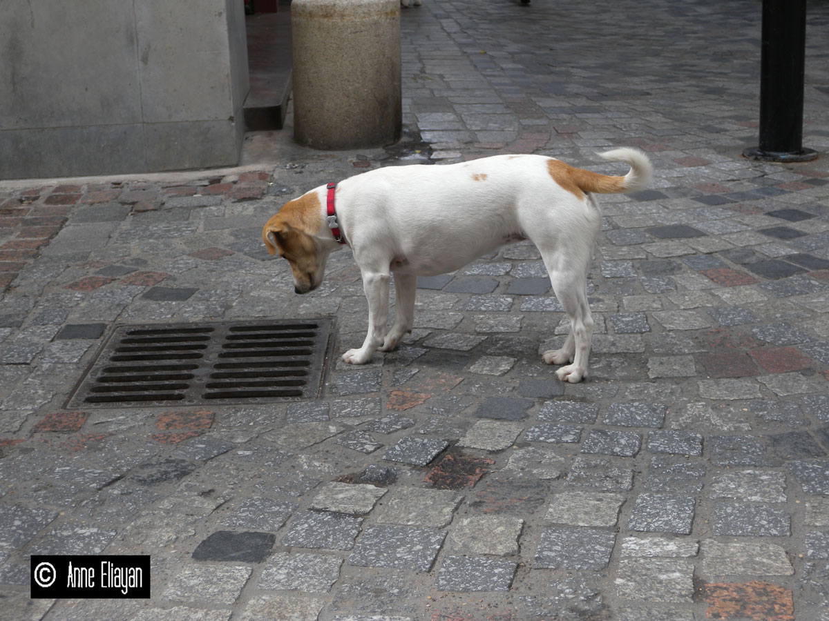 anne-eliayan-chien
