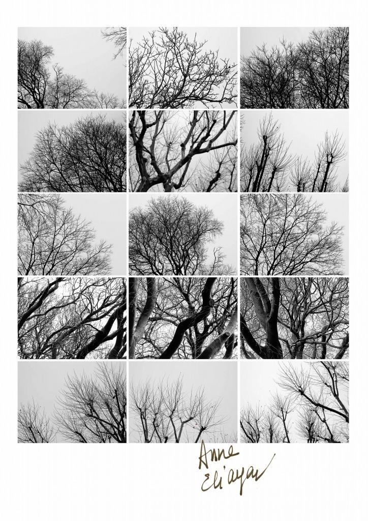 Boulevard Emile Combes les arbres sont nus pour Arles Gallery galerie de photos Anne Eliayan