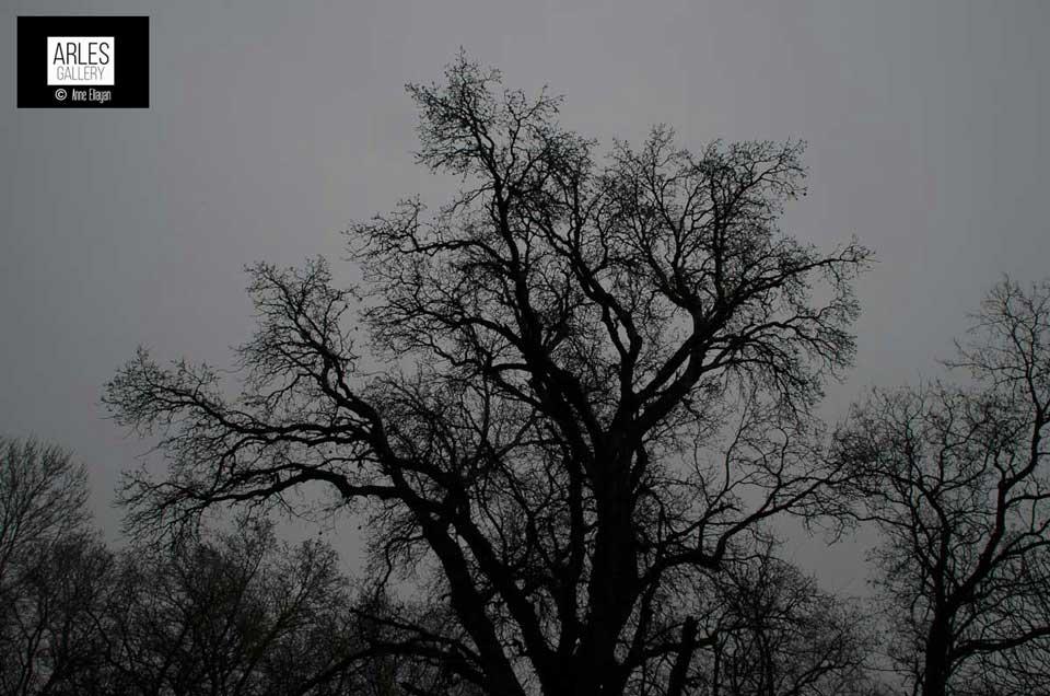 arbres-noirs-arles-gallery-anne-eliayan