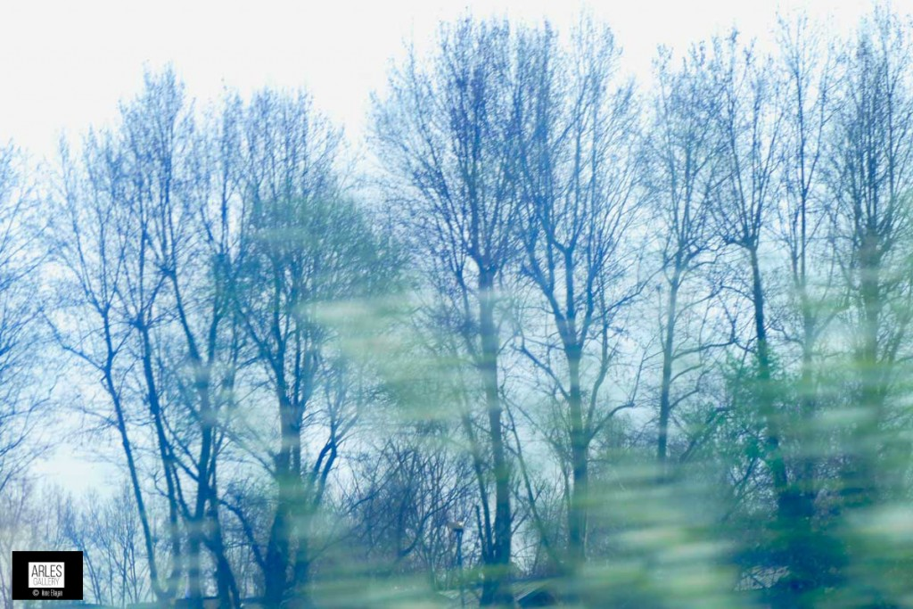 arbres-vus-du-bus-photo-arles