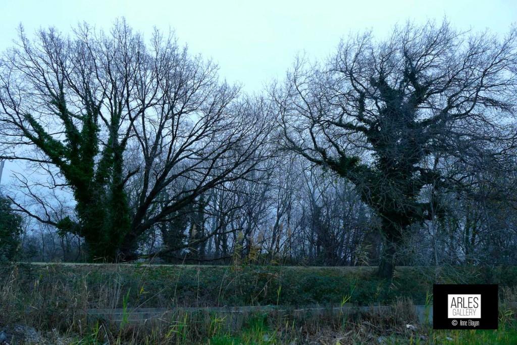 arbres_1530011