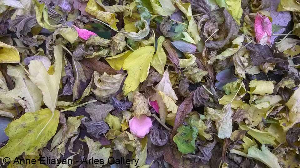 arles-gallery-feuilles-automne-anne-eliayan