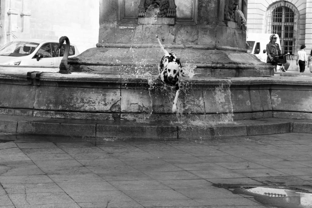 chien-dans-la-fontaine-arles-Kali-Zed