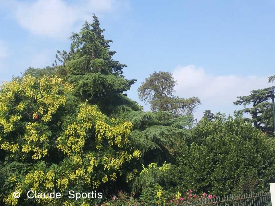 claude-sportis-arbres