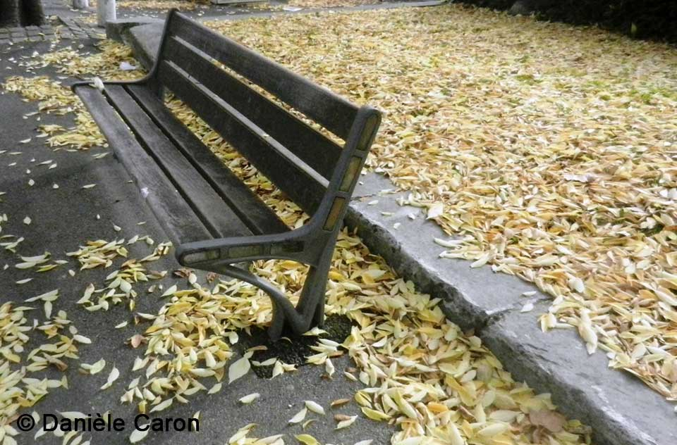 daniele-caron-banc-public