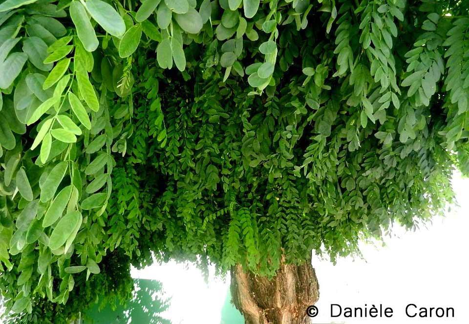 daniele-caron-photo