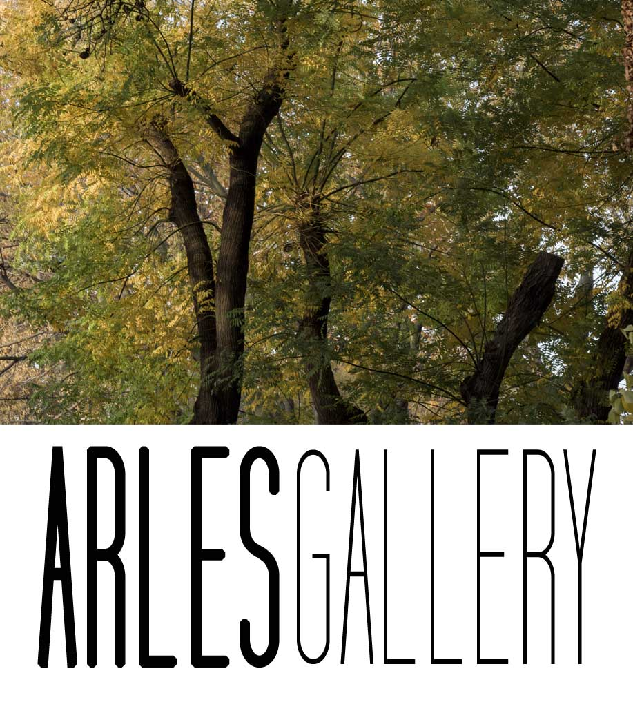 galerie-arles-photos-arbres-automne