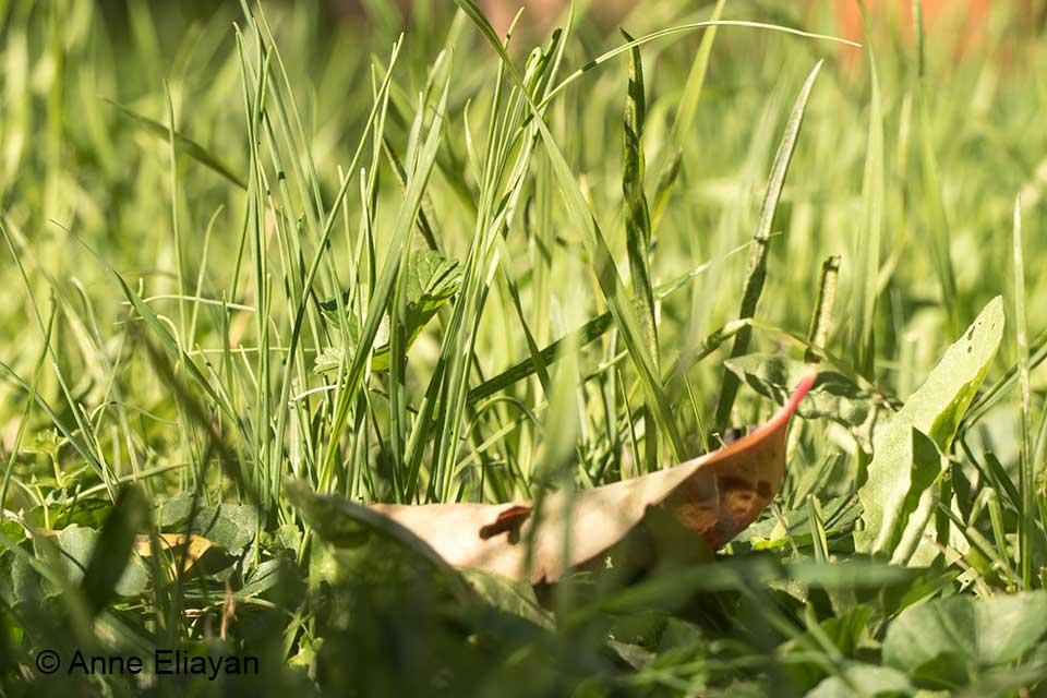 herbe-de-la-prairie-arles-anne-eliayan