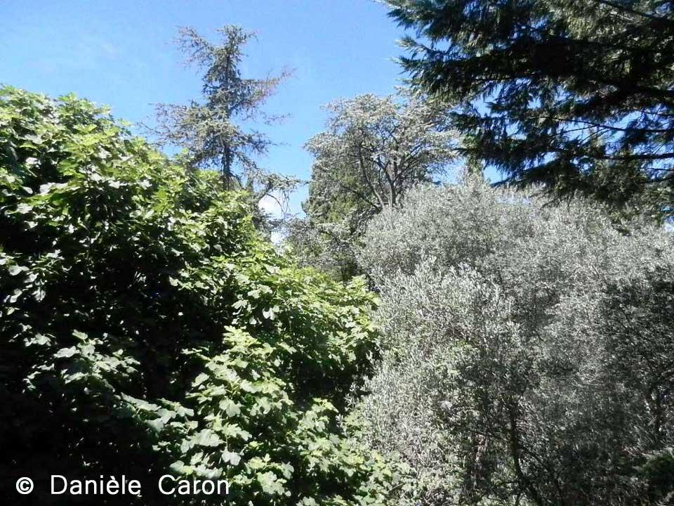 jardins-arles-daniele-caron