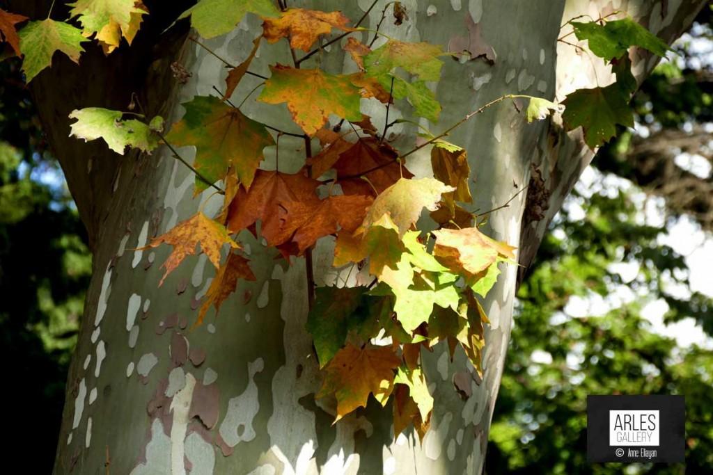 lices-automne-arles-gallery
