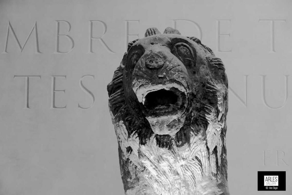 lion-arles-gallery-anne-eliayan