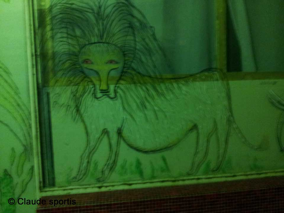 lion-dans-une-vitrine-claude-sportis