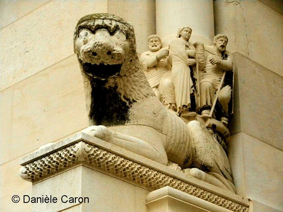 lion-en-croatie-daniele-caron
