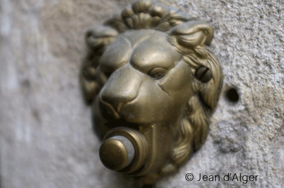 lion-photo-jean-d-alger_still_tmp