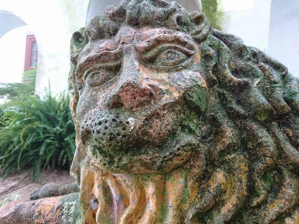 lion portugais jacquie arlaud