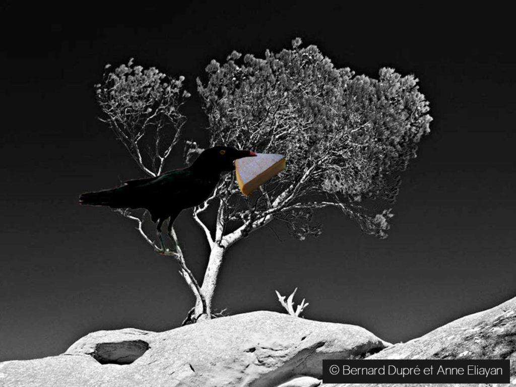 maitre-corbeau-sur-un-arbre-perché-Bernard-Dupré