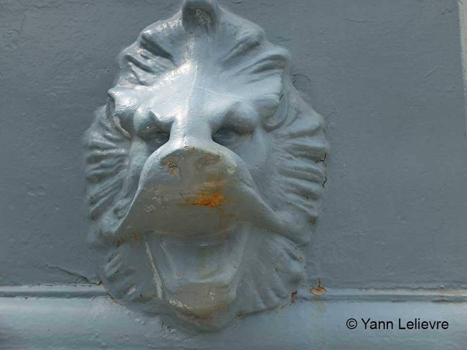 photo-lion