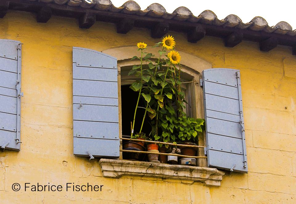 tournesols-sous-les-toits-photo-fabrice-fischer_still_tmp