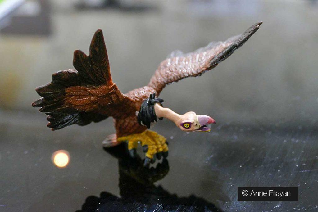 vautour-anne-eliayan