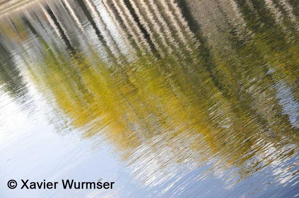 xavier-wurmser-arbres