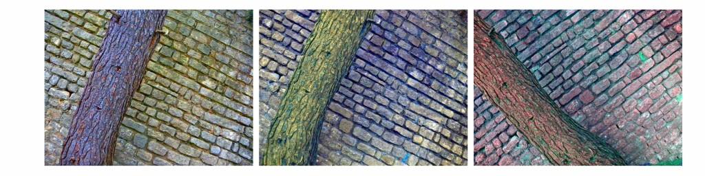 acqeduc-arbre-arles-gallery-anne-eliayan