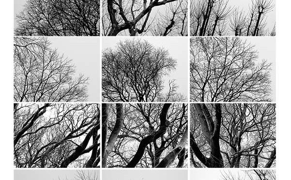 Assemblage : arbres Emile Combes hiver