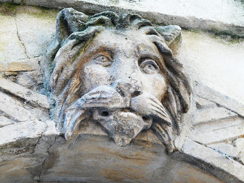 lion P1270656 xs