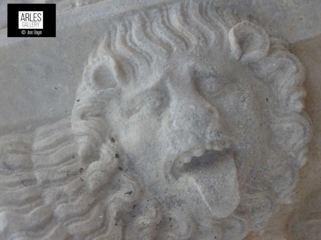 Lion-de-la-semaine-arles-gallery