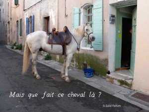 cheval-Said-Fahim