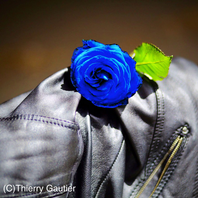 IMG_2584.JPG thierry gautier rose bleue