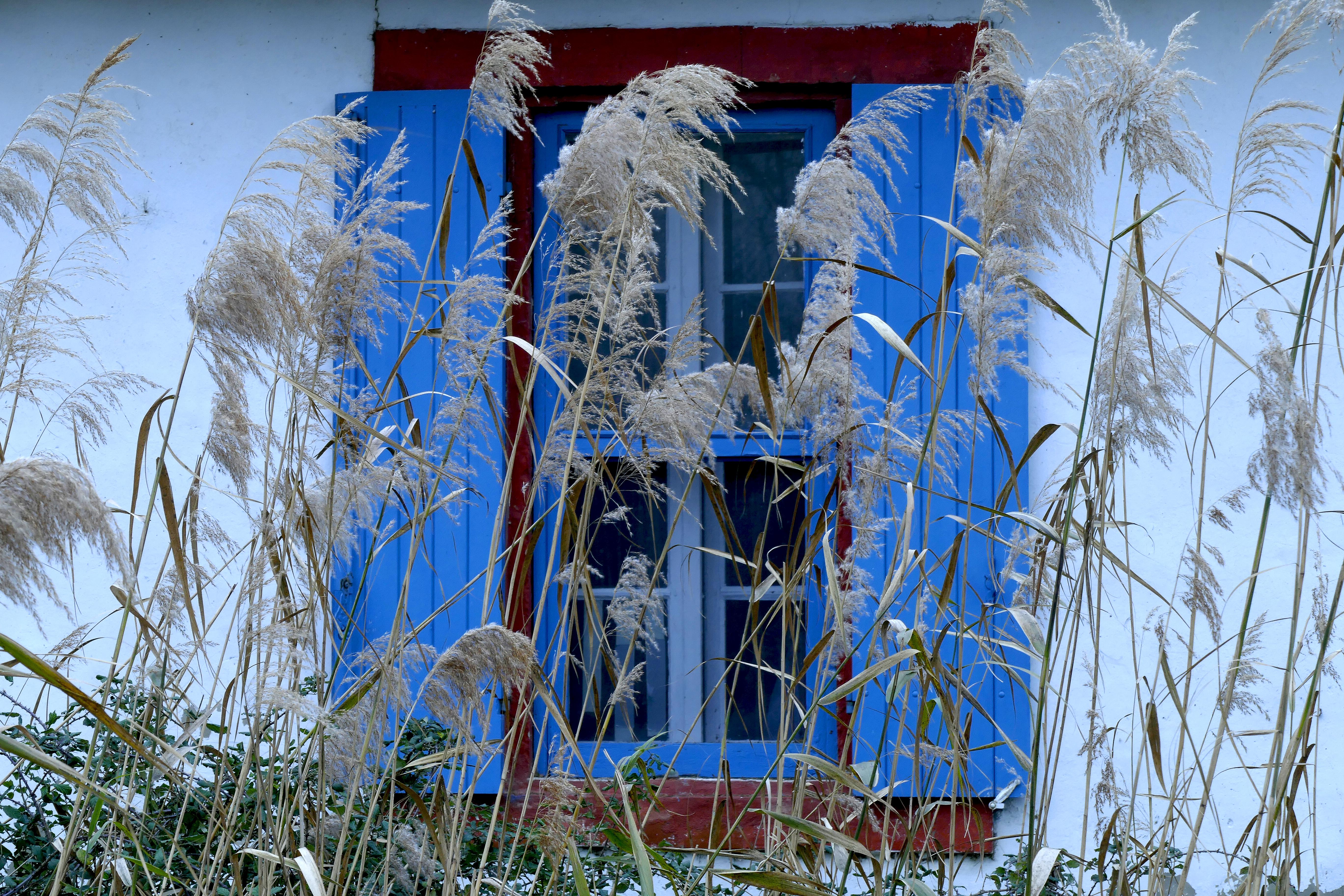 fenetre bleue_1530196