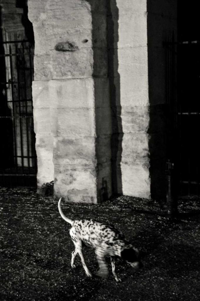 Xavier-Wurmser-nuit-amphitheatre-arles