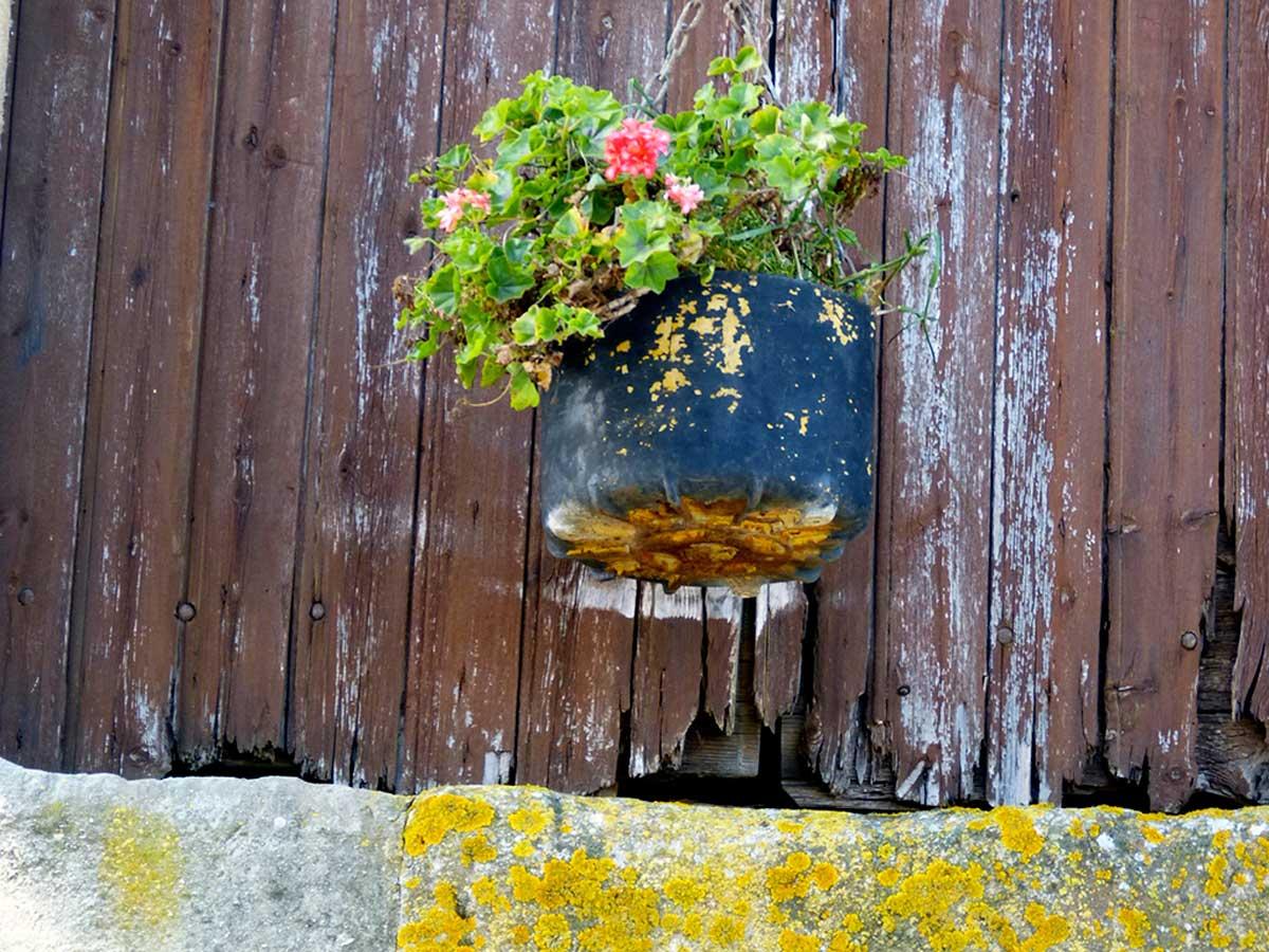Carole-Martin-plantes-arles