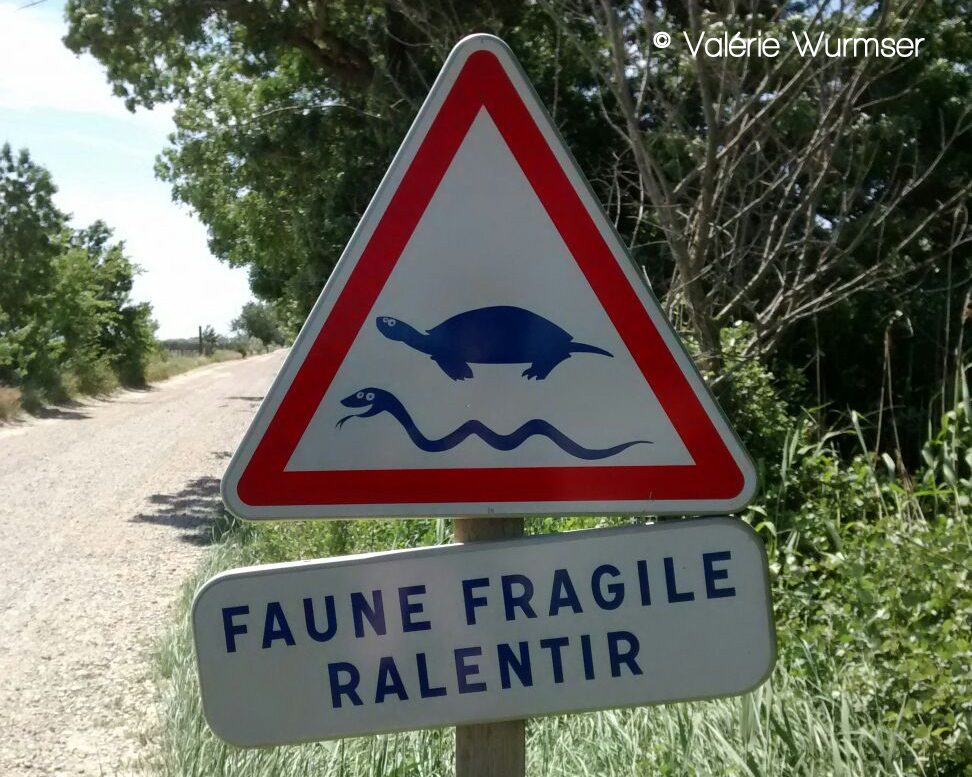 panneau faune fragile photographie par Valerie Wurmser