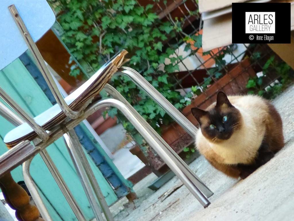 anne-eliayan-galerie-de-chats-la-chaise-le-look