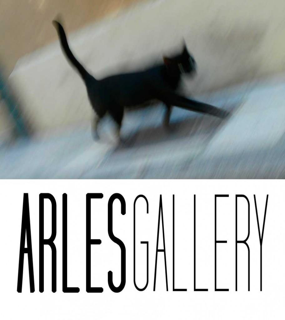 galerie-de-chats-anne-eliayan-photos