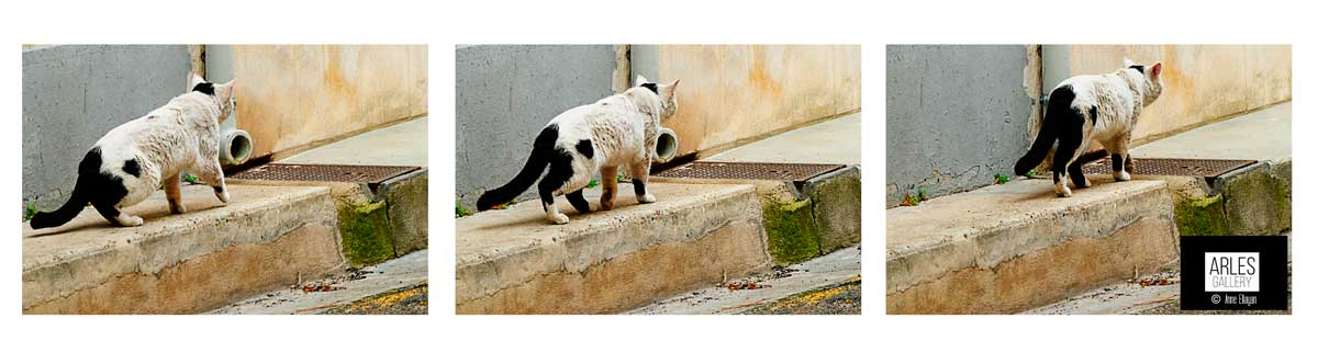 galerie-photos-chat-dans-arles-anne-eliayan