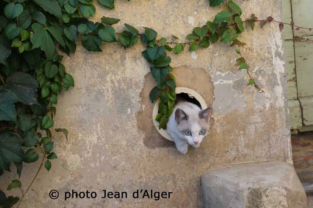 photo-Jean-d'Alger-chat-passe-muraille