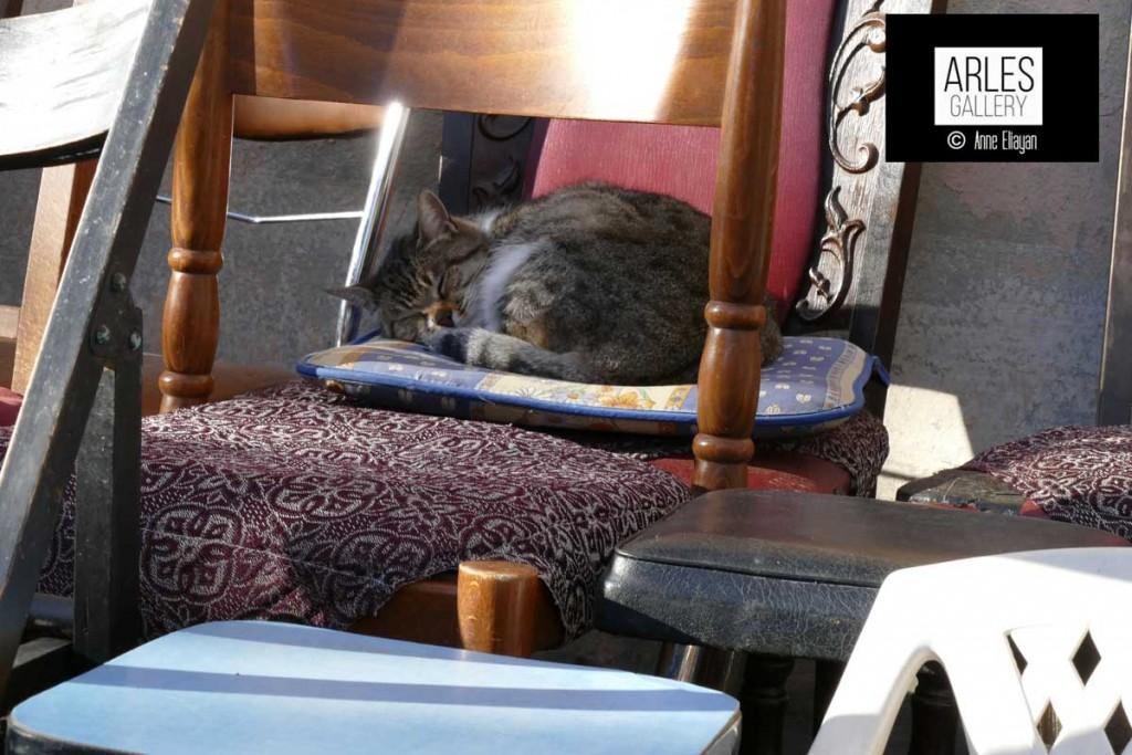 photographie-anne-eliayan-galerie-de-chats