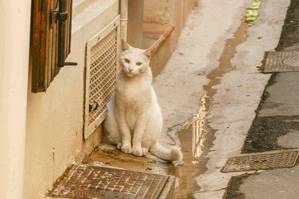 chat Arles