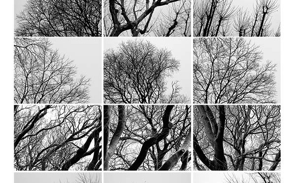 Assemblage : arbres Emile Combes hiver