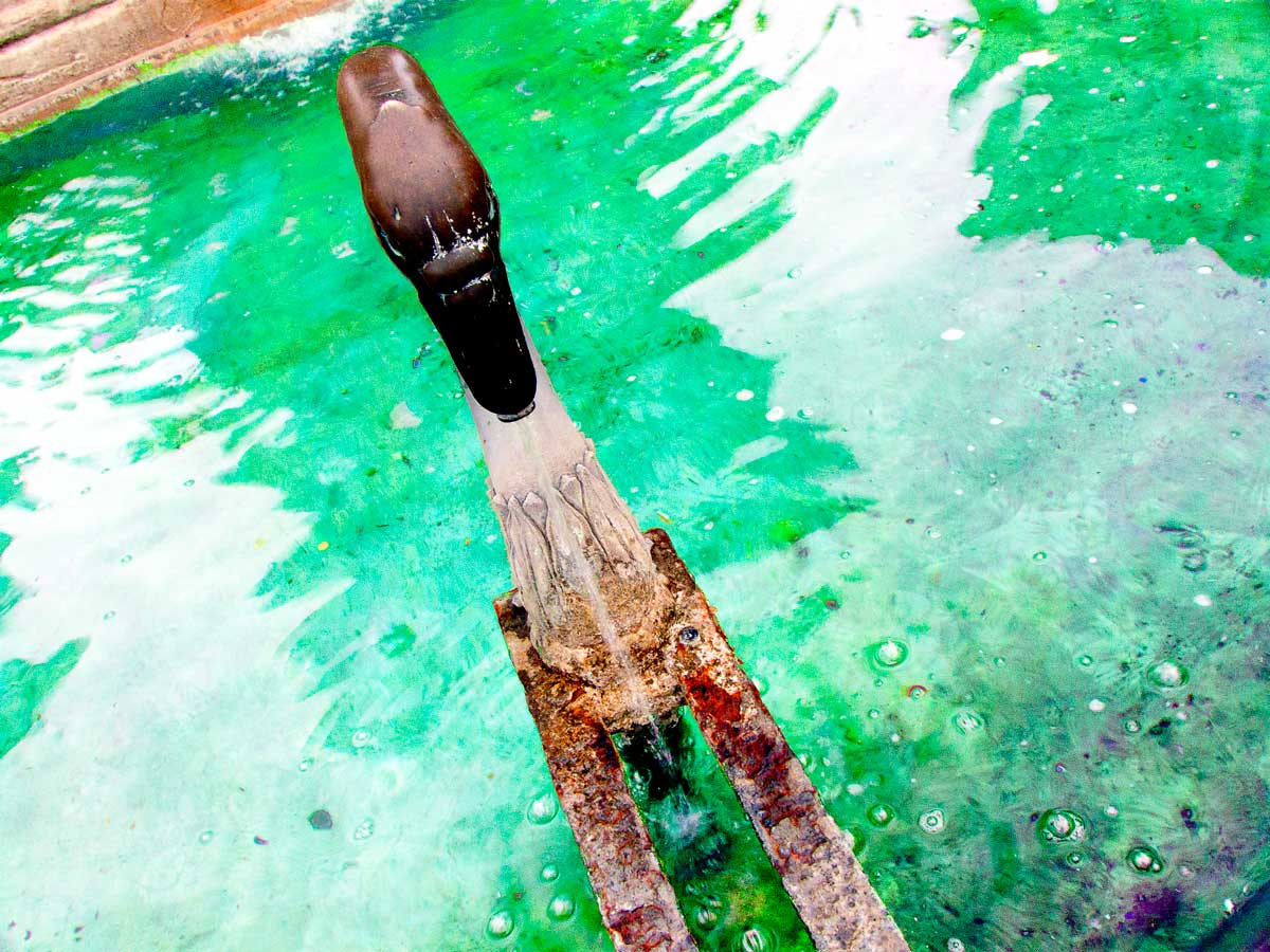 Cygne à la fontaine acidulée